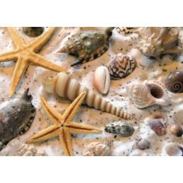 Mussels - Postcard