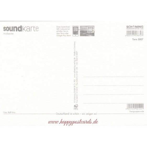 Weißstörche - Sound-Karte