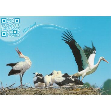 White storck - Sound-Card