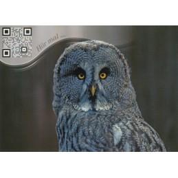 Owl - Sound-Card