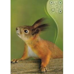 Eichhörnchen - Sound-Karte