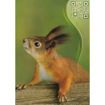 Squirrel - Sound-Card