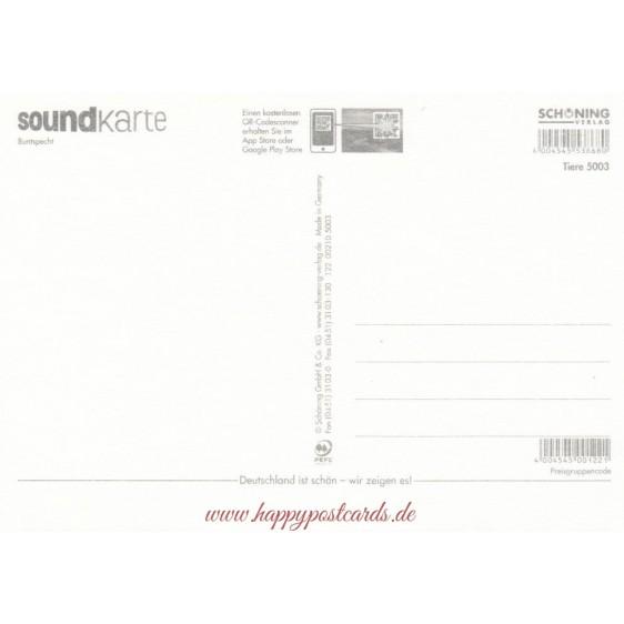 Buntspecht - Sound-Karte
