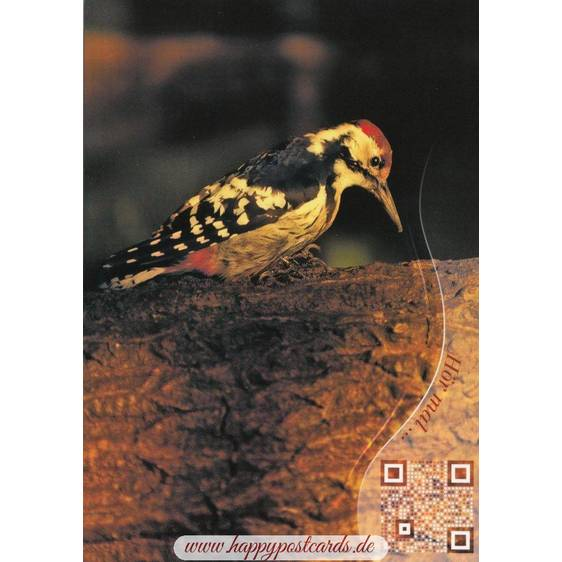 Spotted Woodpecker - Sound-Card