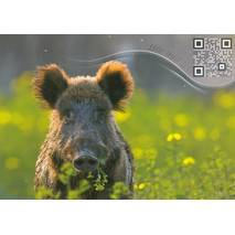 Wild sow - Sound-Card