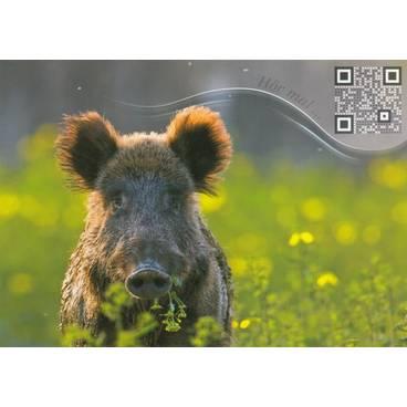 Wild sow - Sound-Card