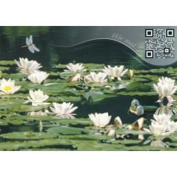 Lily Pond - Sound-Card