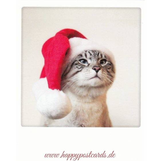 Christmas Cat - PolaCard